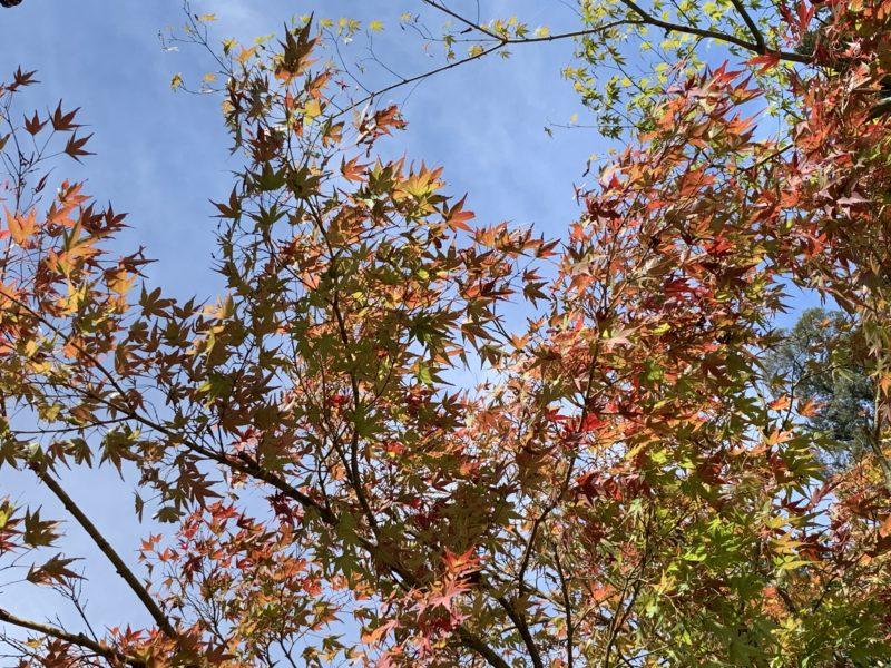 小さい秋見つけた!