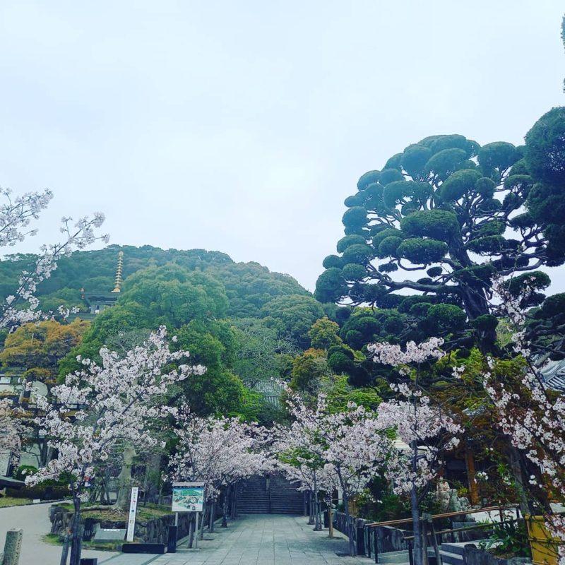 須磨寺に護摩祈祷にうかがいました